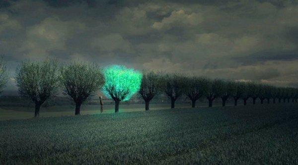 Светящиеся растения будут освещать улицы