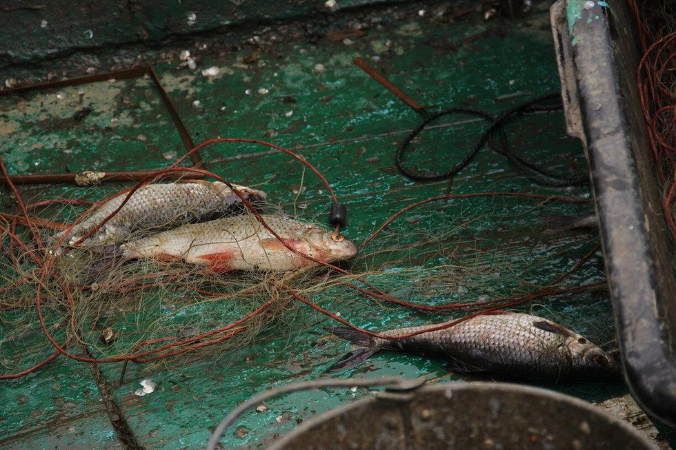 Полицейские поймали трех пожилых рыбаков с незаконным уловом