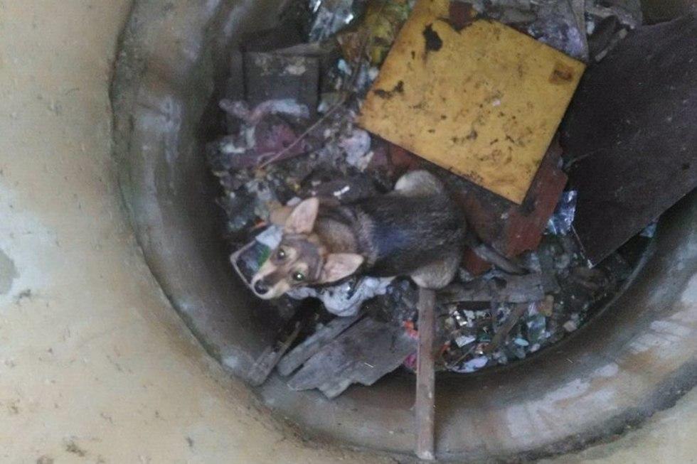 Спасатели пришли на помощь псу, провалившемуся в открытый колодец рядом с домом