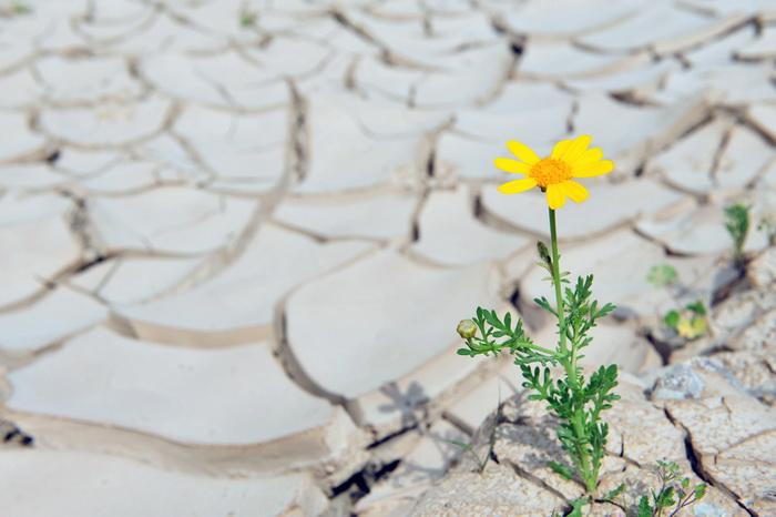 Как растения запоминают стрессы