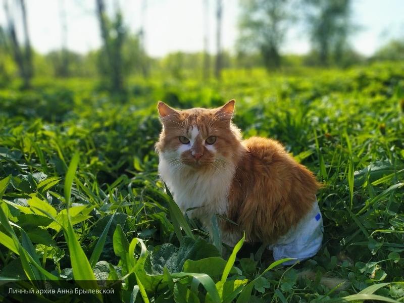 Ученые опровергли слухи о независимости домашних кошек