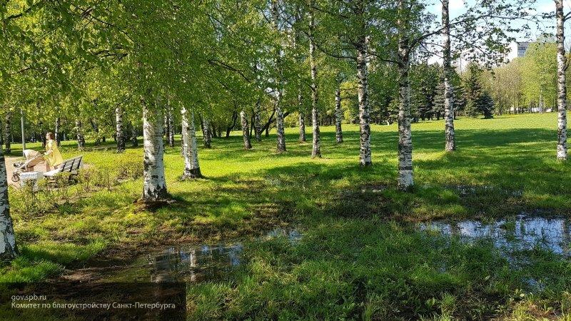 Три комитета Смольного займутся осушением парка Академика Сахарова