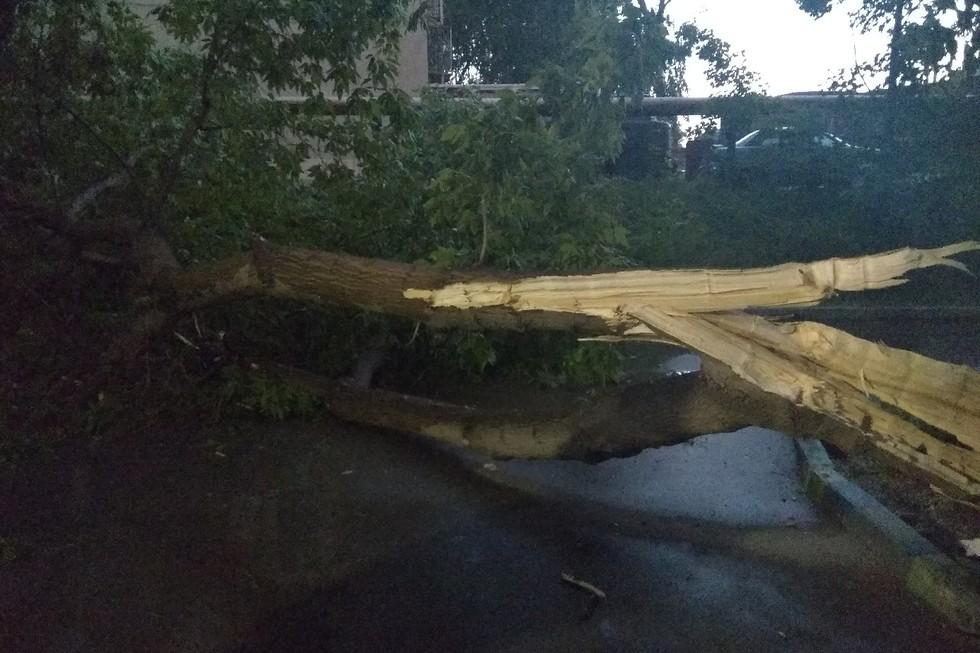 Упавшее дерево блокировало проезд во дворе многоэтажки в Энгельсе
