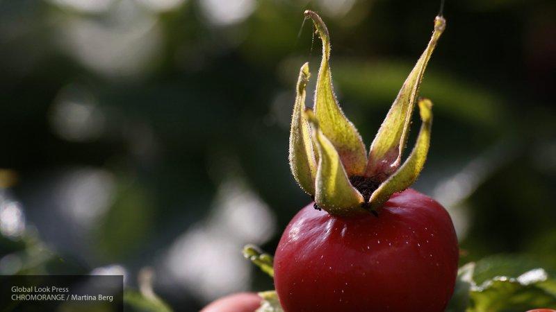 Россияне посоветовали Финляндии запретить вместе с шиповником колючую малину