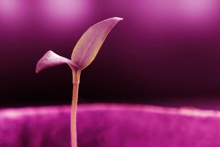 «Дремлющие» растения помогут сохранить электричество