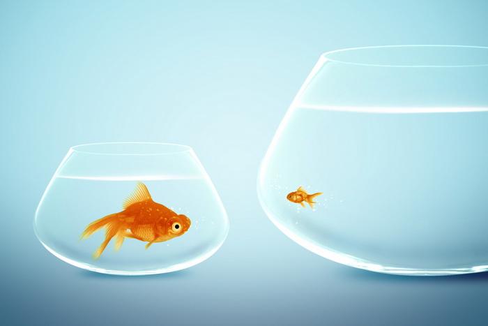 Рыбы эволюционируют от рыболовов