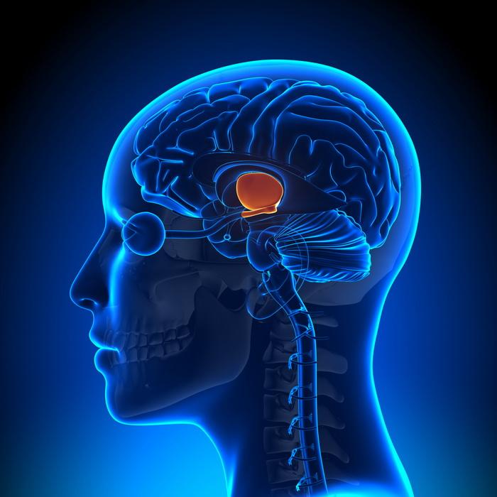 В мозге нашли нейронный «компас»