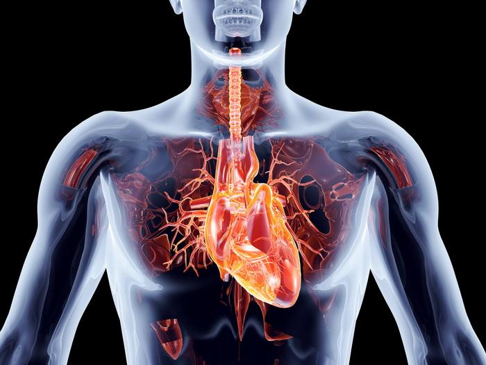 Изменчивое сердце