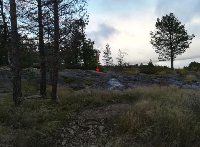 В Карелии нашли неизвестные ранее петроглифы