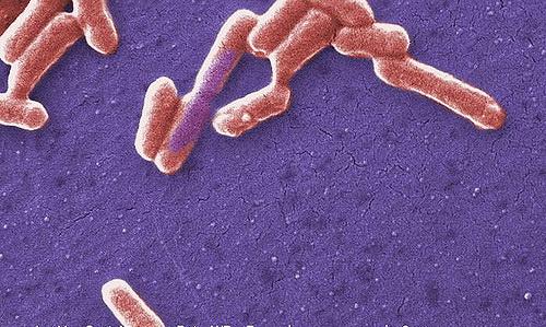 Кишечные бактерии управляют кишечными часами