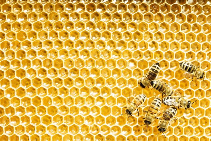 Пчелиная математика