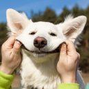 Люди учатся понимать собак постепенно