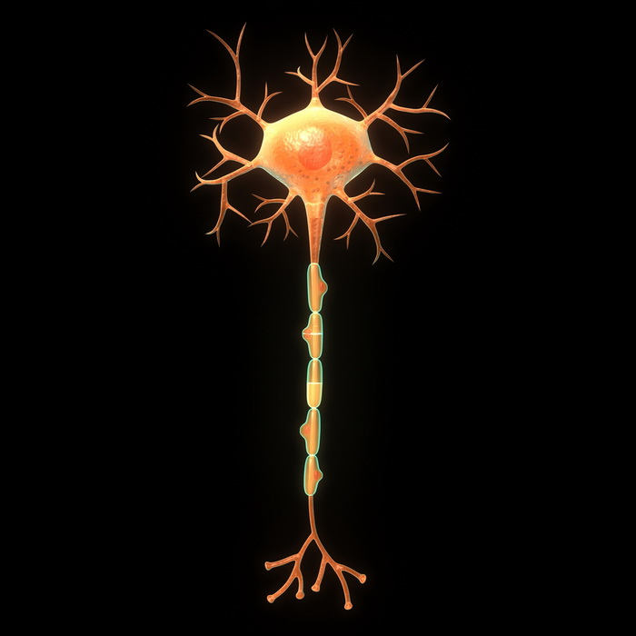 Как нейроны справляются с многозадачностью