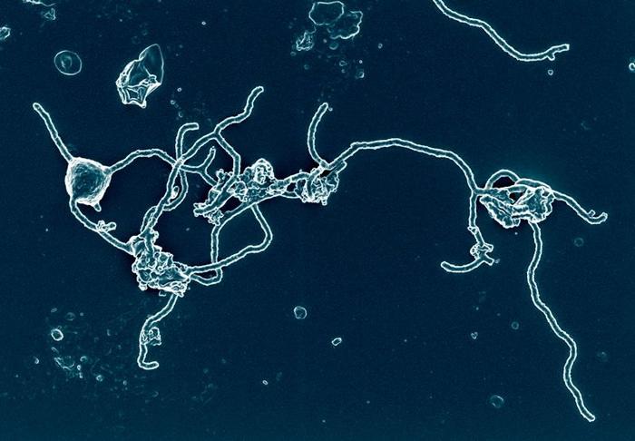 Асгардского микроба вырастили в пробирке