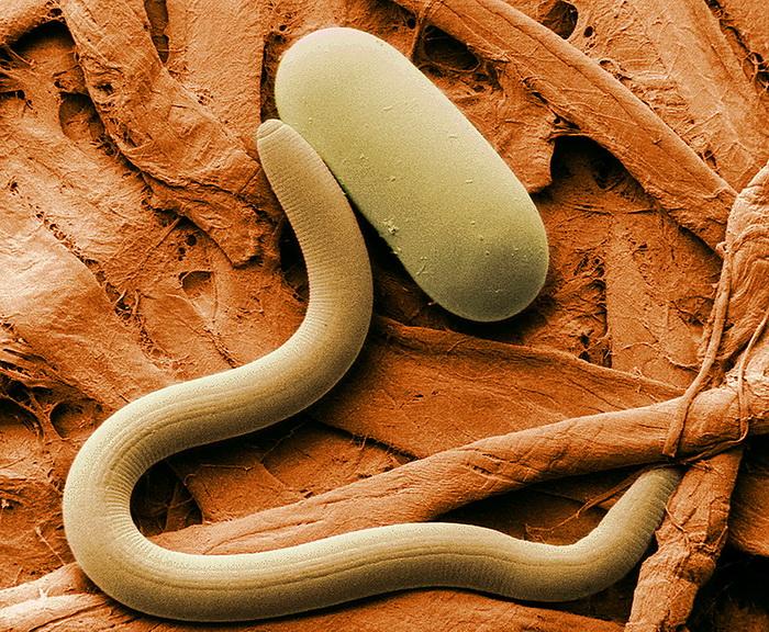 Растения разговаривают с червями на их языке