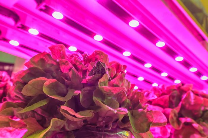 Растения придирчивы к свету