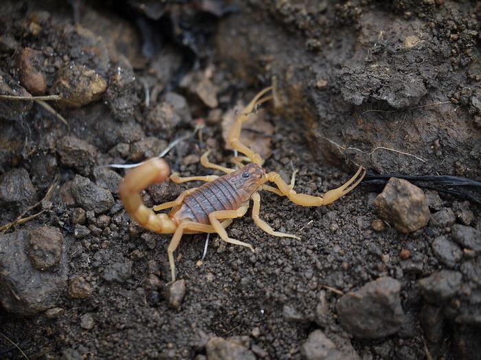 Алкогольный синдром можно лечить скорпионьим ядом