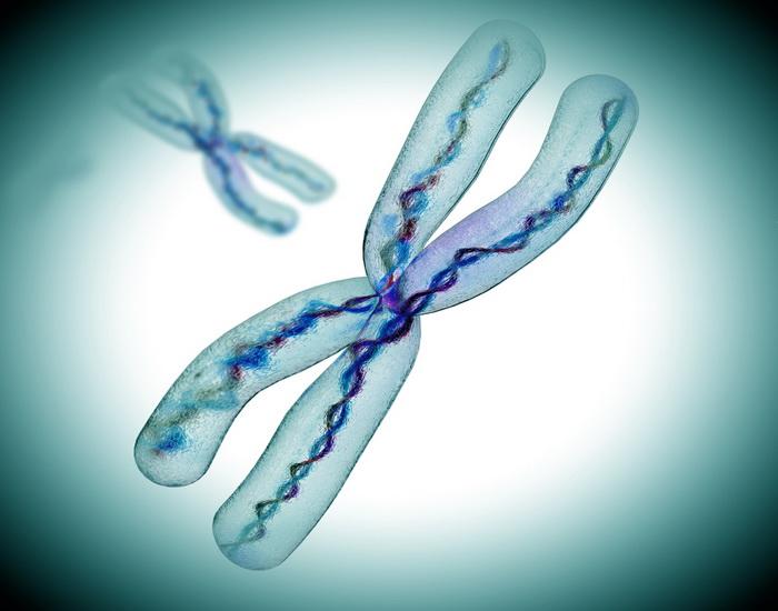 Х-хромосому прочитали от начала до конца