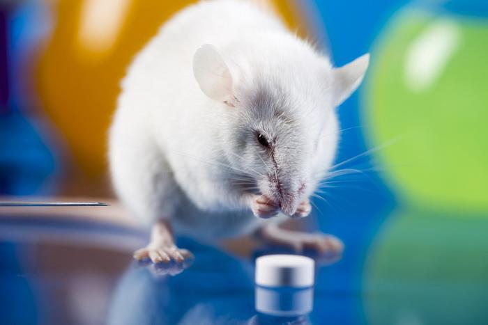 Для человеческой деменции создали мышиную модель