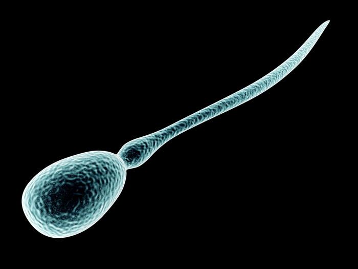 Как плавают сперматозоиды