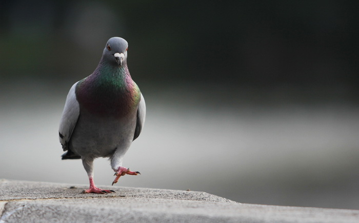 Птичий мозг похож на звериный