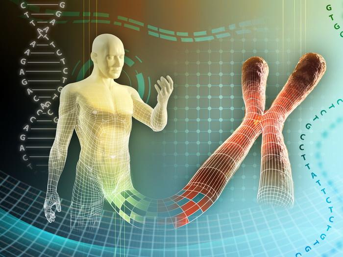У мужчин и женщин гены работают по-разному