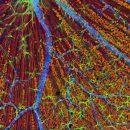Зрительным клеткам омолодили ДНК