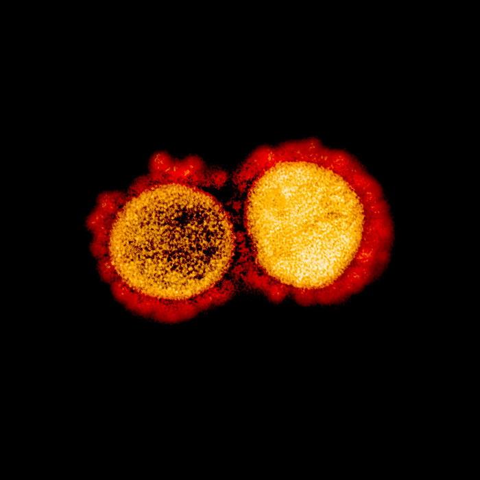 Коронавирус в хромосомах