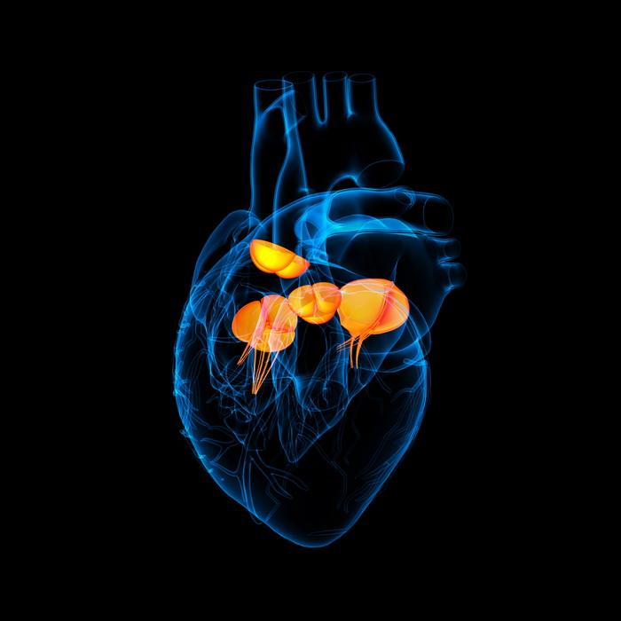 Для больного сердечного клапана нашли лекарство