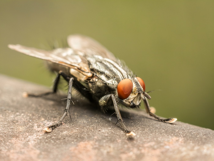 Почему муху трудно убить