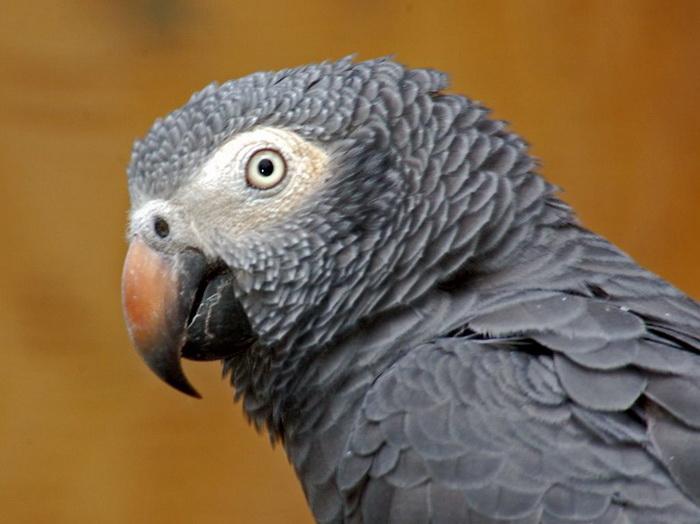 попугаи.jpg