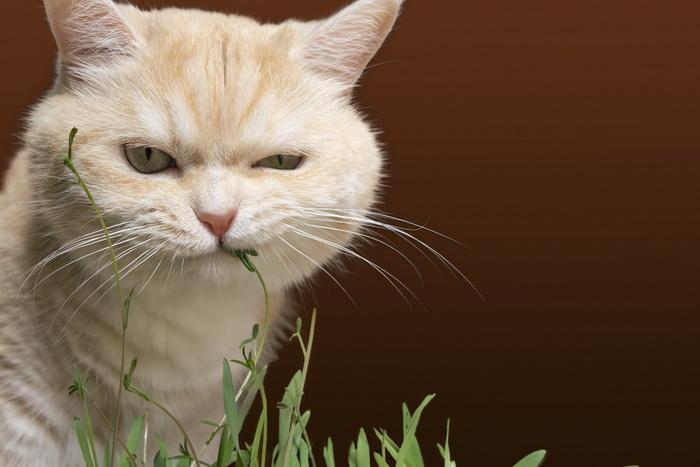 Почему кошки любят кошачью мяту