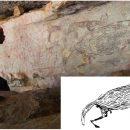 На северо-западе Австралии с помощью осиных гнёзд определили возраст самого древнего наскального рисунка аборигенов