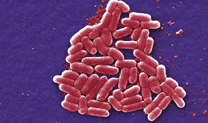 Бактерии мешают матерям заботиться о потомстве