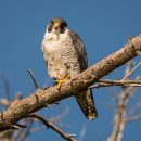 Генетика помогает птицам в сезонных перелётах