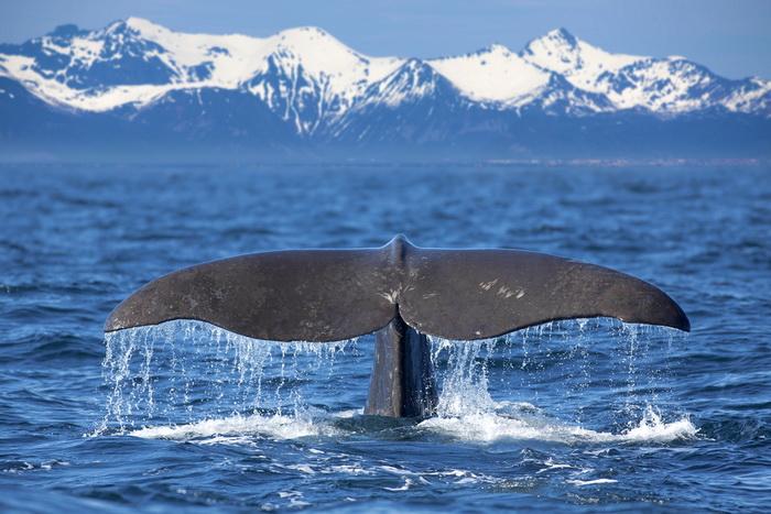 Зачем китам большой мозг